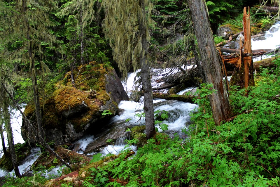 Forest and streams from Joffre Lakes hike